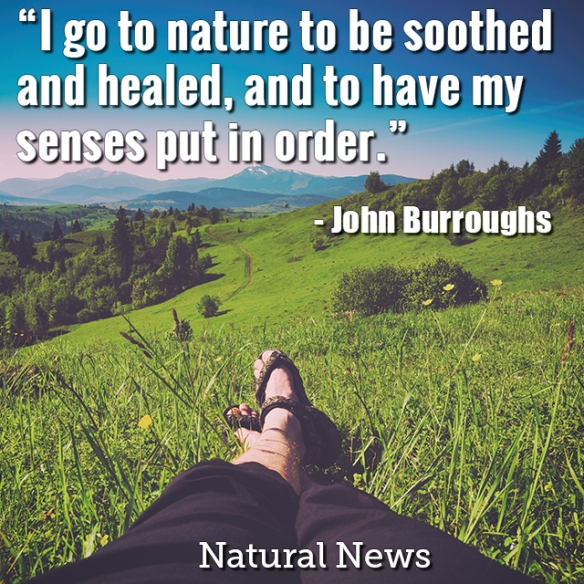 Quote-I-Go-To-Nature-To-Be-Soothed-And-Healed