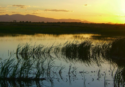 wetlands-at-sunset-1409535