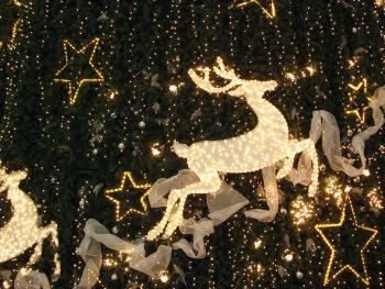 christmas-reindeer-1383554