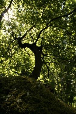 old-tree-1-1315209