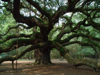 angel-oak-3-1554004