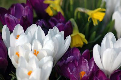 spring-medley-1401324